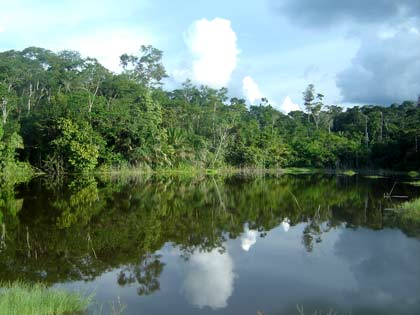 Forest and river by the Surui village
