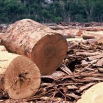 amazon-deforestation-lumber1