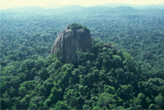 amazon-forest-rock