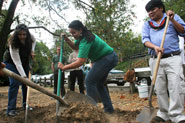 denise-elenira-mendes-chief-almir-tree-planting-for-chico-mendes